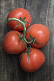 Freshly picked ripe red tomatoes. Off the vine lying on an old rustic wooden table Royalty Free Stock Images