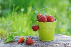 Freshly Picked Ripe Strawberries Bucket On Wooden Background Royalty Free Stock Image