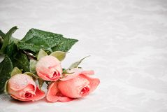 Freshly Picked Roses Stock Images