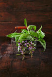 Freshly picked sage in wire basket Stock Images