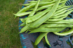 Runner beans with space at side. Royalty Free Stock Images