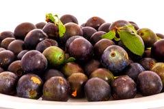 Freshly picked sloe berries Royalty Free Stock Images