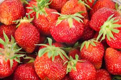 Freshly Picked Strawberries Stock Photography
