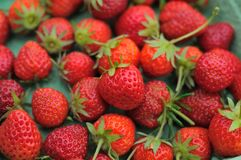 Freshly picked strawberries Stock Photos