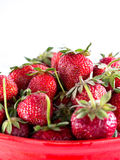 Freshly picked strawberries Royalty Free Stock Image