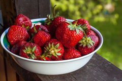 Freshly picked strawberries in a bowl royalty free stock image