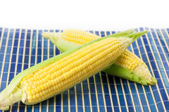 Freshly picked sweet corn with copy space Royalty Free Stock Image