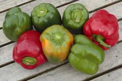 Freshly picked sweet peppers Stock Photography
