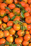 Freshly picked tangerines Stock Photo
