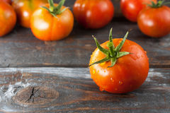 Freshly Picked Tomatoes Stock Images