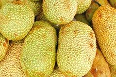 Freshly Picked Tropical Jackfruits Royalty Free Stock Photos