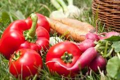 Freshly picked vegetables Stock Image