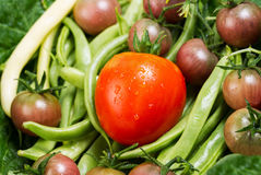 Freshly picked Vegetables Royalty Free Stock Photography