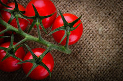 Freshly picked vine tomatoes Stock Photography