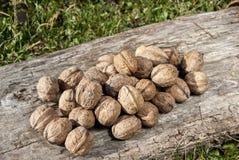 Freshly picked walnuts Royalty Free Stock Image