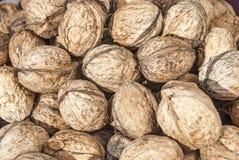 Freshly picked walnuts Stock Photography