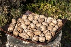 Freshly picked walnuts Stock Photos