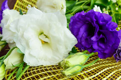 Freshly picked white and purple flowers eustomy (lisianthus) in the form of a bouquet Stock Images