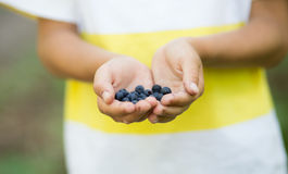 Freshly picked wild blueberries in boy's hands Royalty Free Stock Photos