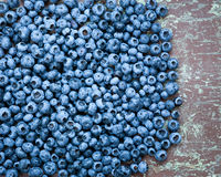 Freshly picked wild blueberries Royalty Free Stock Images