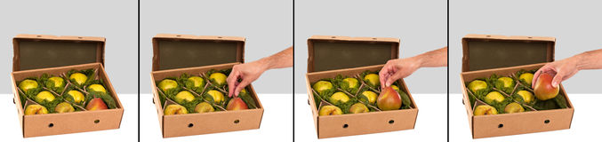 Freshly picked Williams (Bartlett) pears in box Royalty Free Stock Photo