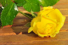 Freshly picked yellow rose Stock Photo