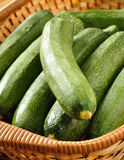 Freshly picked zucchini Royalty Free Stock Images
