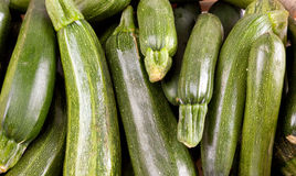 Freshly picked zucchin Stock Photography