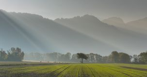 Freshly planted agricultural field with small plants and a mountain landscape behind with lone tree and sunlight and sunbeams. In the Maienfeld region of stock photos