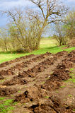 Freshly planted potato field. Planting potatoes in a field. Focus in on the freshly planted rows stock photo