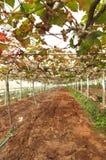 Freshly planted vegetables in rich fertile soil Stock Images