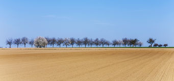 Freshly ploughed acre with row Royalty Free Stock Photography