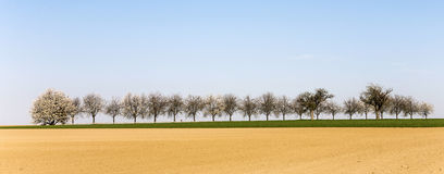 Freshly ploughed acre with row Royalty Free Stock Image