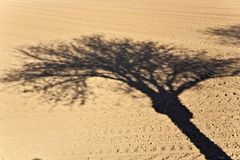 Freshly ploughed acre with shadow of tree Royalty Free Stock Photo