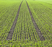 Freshly ploughed acre in spring Royalty Free Stock Photo
