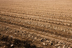 Freshly ploughed field Stock Photography