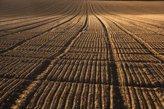 Freshly plowed acre Stock Photography