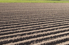 Freshly plowed agricultural field Royalty Free Stock Image