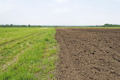 Freshly plowed farm field Stock Images