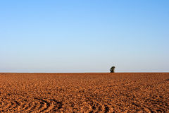 Free Freshly Plowed Field Royalty Free Stock Photos - 15502228