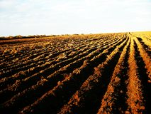 Freshly Plowed Field Royalty Free Stock Images