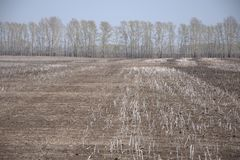 Freshly plowed field with the remnants of winter crops. Landscape stock photography