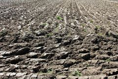 Freshly plowed field with wet soil ready for further agricultural work and planting. On warm sunny day royalty free stock images