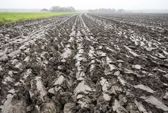 Freshly plowed land in the netherlands. Freshly ploughed land in holland seen closeup Stock Photos