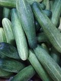 Freshly Plucked Cucumber Royalty Free Stock Photography