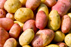 Freshly potatoes Stock Photos
