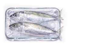 Freshly Prepared Raw Sardine Fish on Ice with a White Background.  Royalty Free Stock Photos
