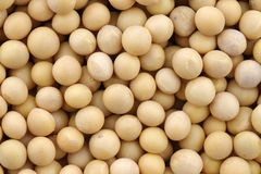 Freshly processed soy beans Royalty Free Stock Image