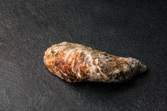 A freshly, raw and single oysters on a black background. Chilled raw oysters. Delicious tropical sea mollusk. Copy space. Close-up of a single close oyster on a Royalty Free Stock Photography
