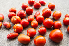 Freshly ripped ripe tomatoes Stock Image